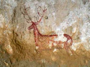 G-ciervo-Chimiachas-rupestre